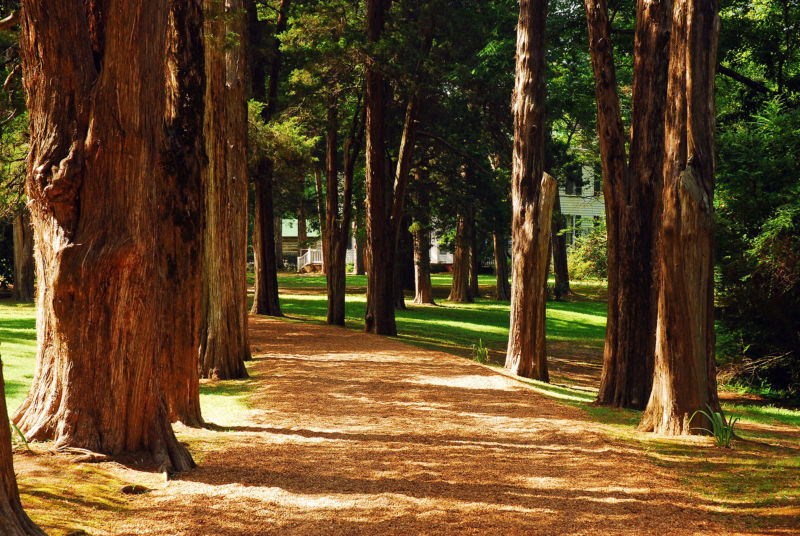 Pathway lined with trees